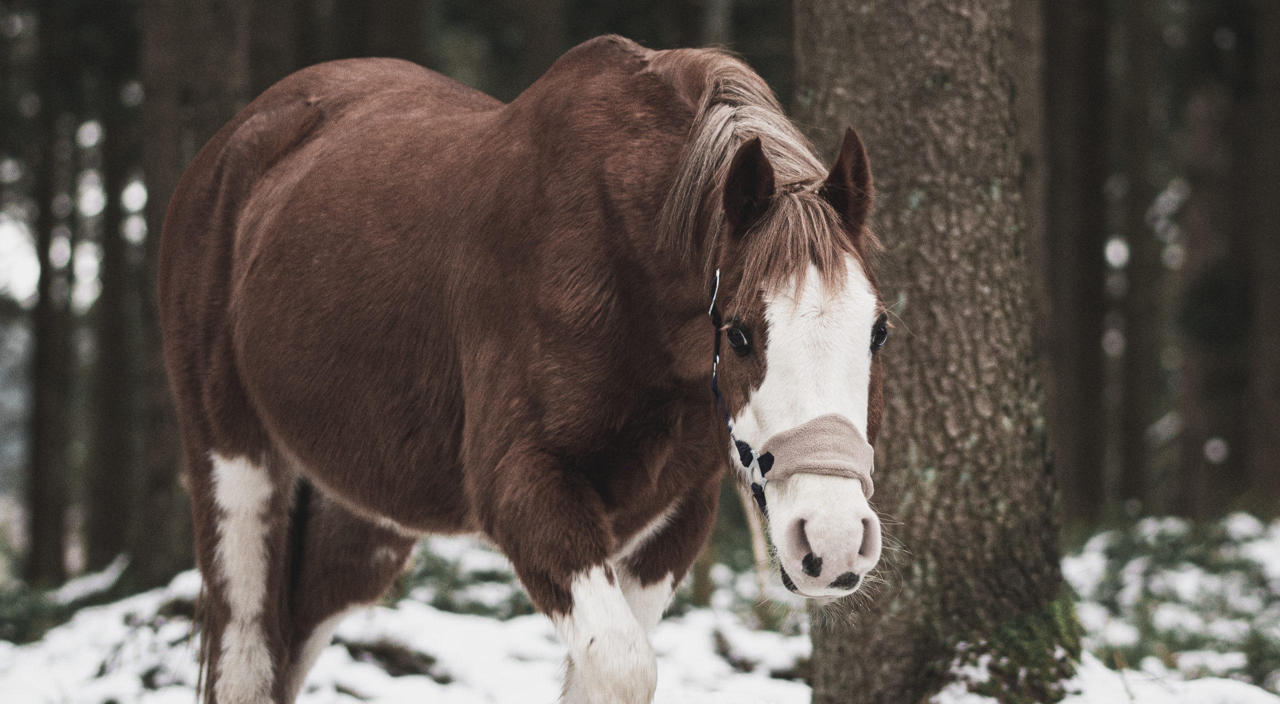 Pony - Tierfotografie 20:11